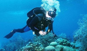 great-barrier-reef-cairns-diving
