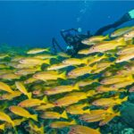 coral sea